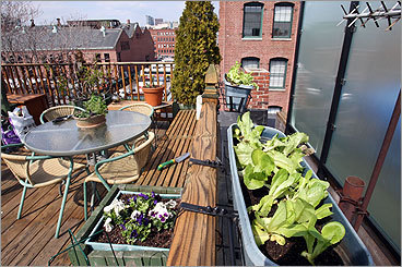 Urban roof vegetable garden ideas