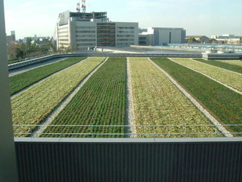 green roof vegetable garden