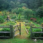 picket garden fence ideas
