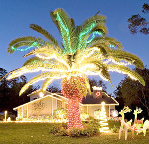 Lighted Palm Tree Christmas | Home Designs Project