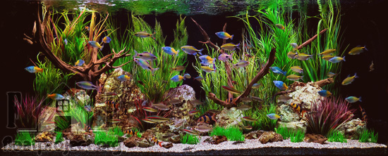 How to set up the perfect tropical fish tank