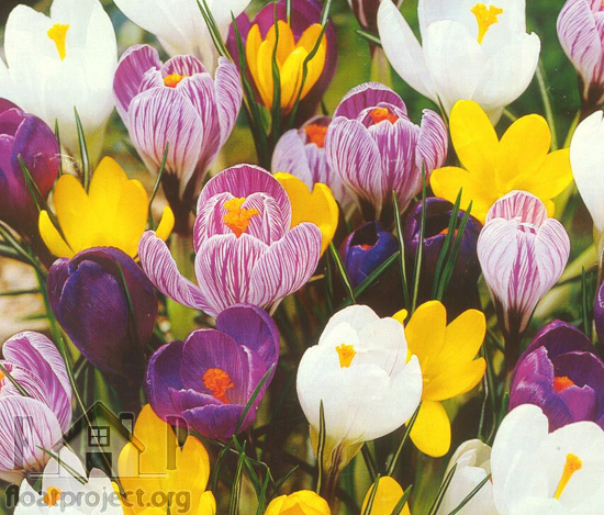 Spring flowers for your garden