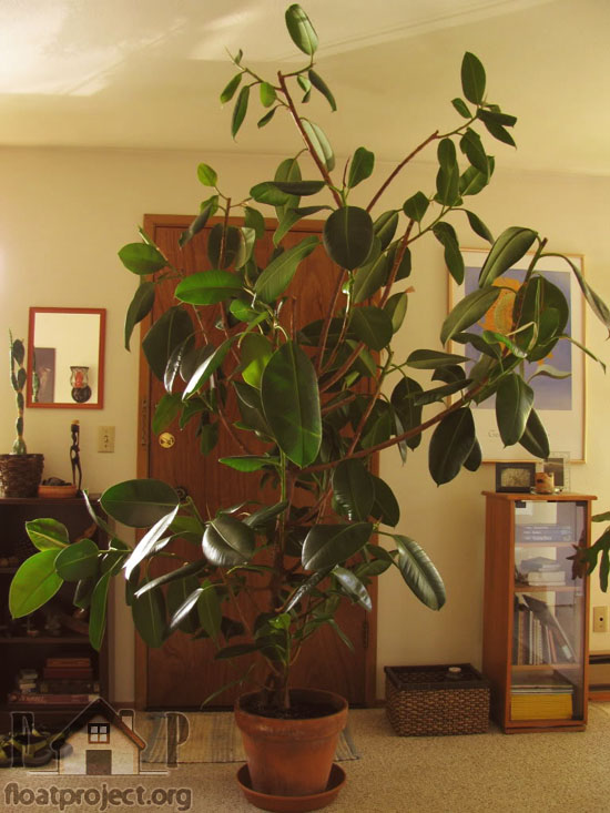 What Houseplants To Place In The Bedroom Home Designs