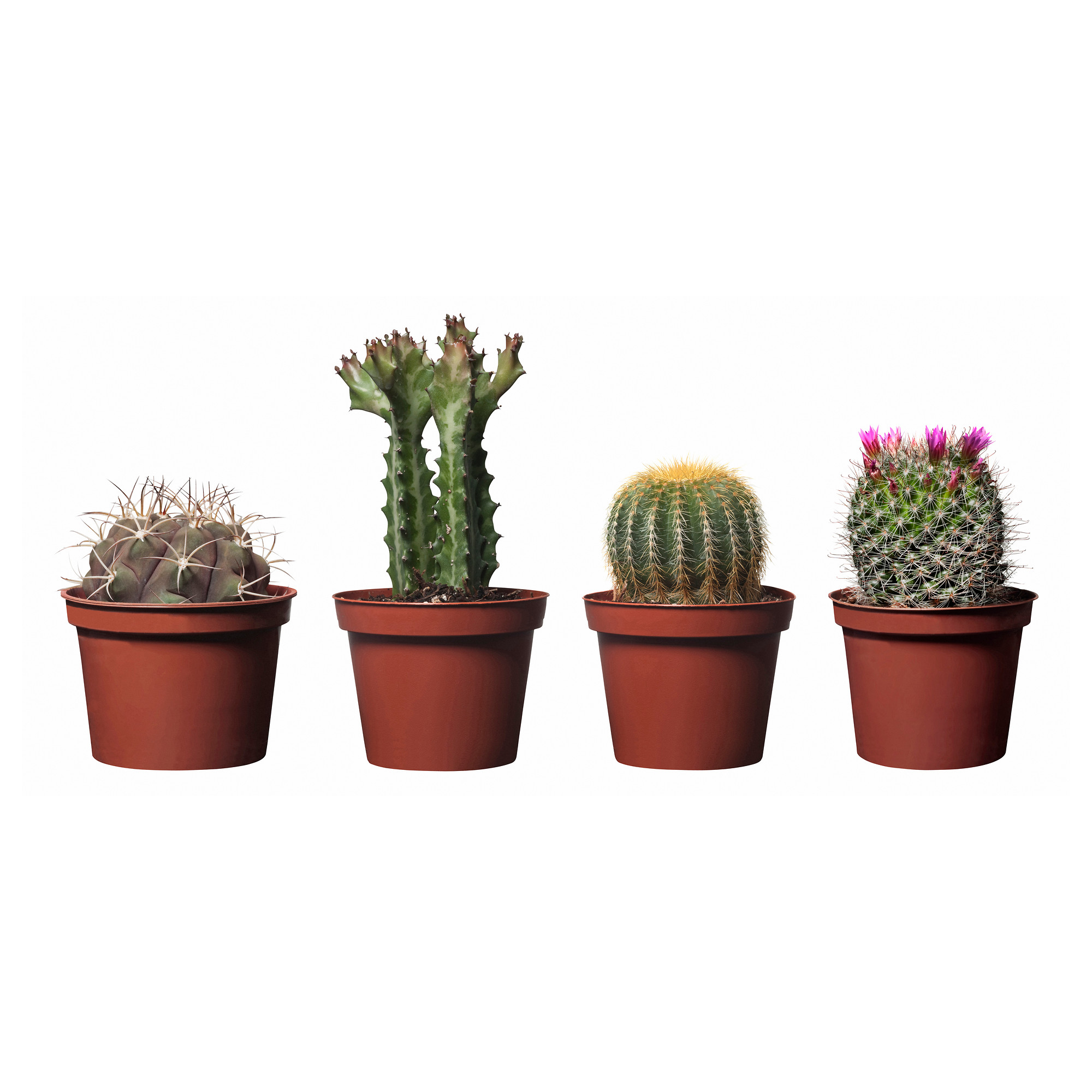 Ikea cactus plants home designs project Cactus pots for sale