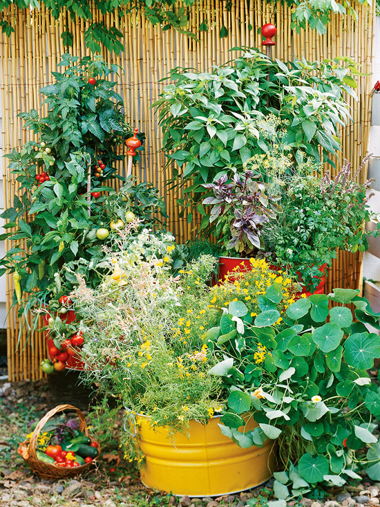 How to make a small vegetable garden home designs project for Veggie garden designs